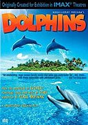 Dolphins download