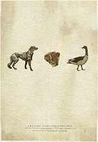 Dog Meet Goose download