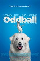 Oddball a tučňáci download