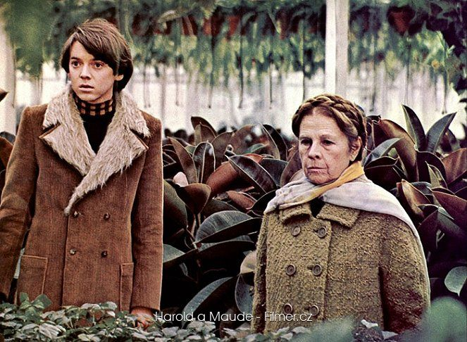 Harold a Maude download