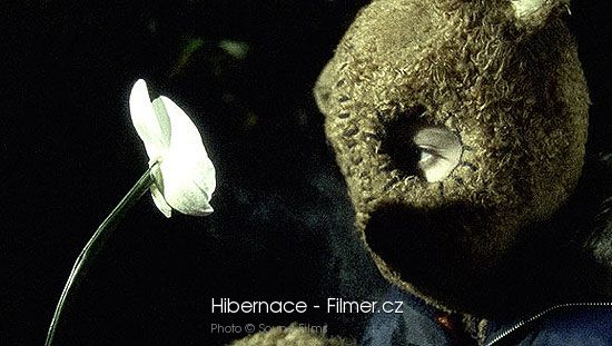 Hibernace download