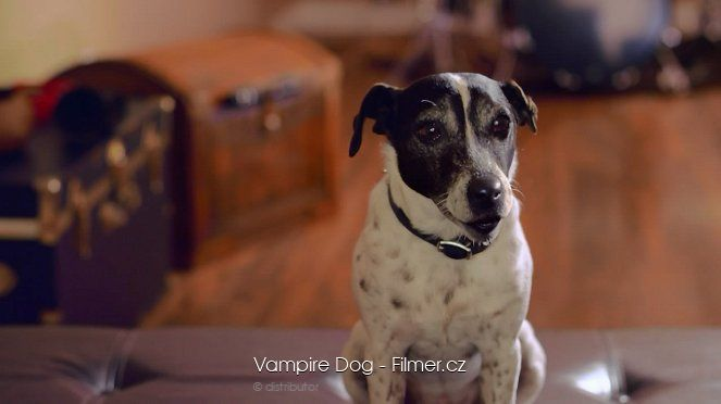 Vampire Dog download