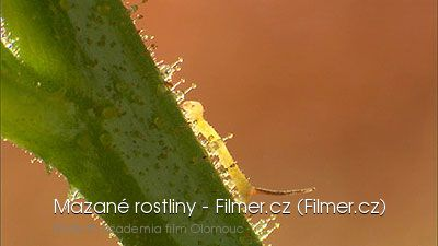 Mazané rostliny download