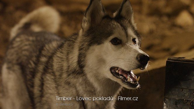 Timber the Treasure Dog download