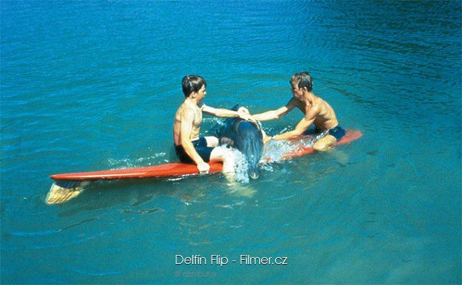 Delfín Flip download